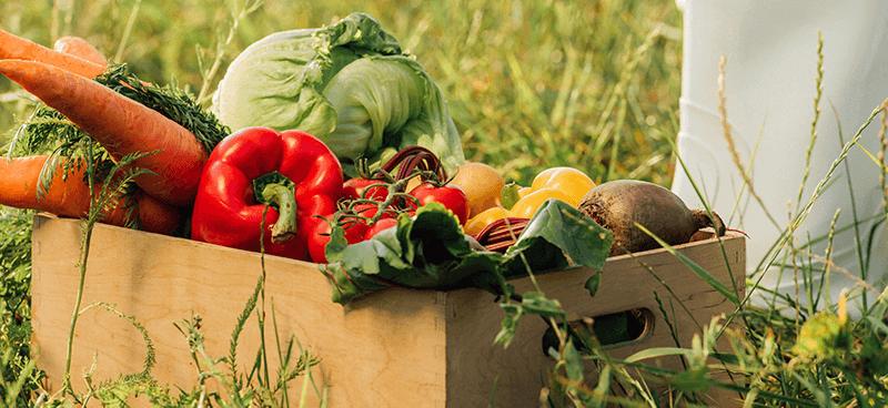 Gemüsefach selber bauen – Die Do-it-Yourself Gemüsebox